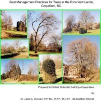 The Riverview arboretum was the first arboretum in British Columbia. The BMP report outlines suggested courses of action to ensure long-term retention of the tree collection.